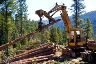 Лесной ресурс / Форум / Проблемы лесопользователей / Реестр недобросовестных арендаторов лесных участков в РФ