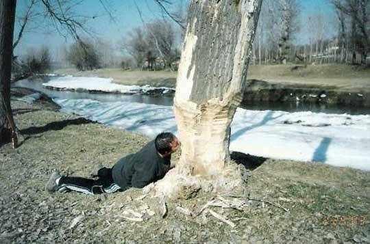 Лесной ресурс / Форум / Interesting facts and fun forest / Peculiarities of the national timber